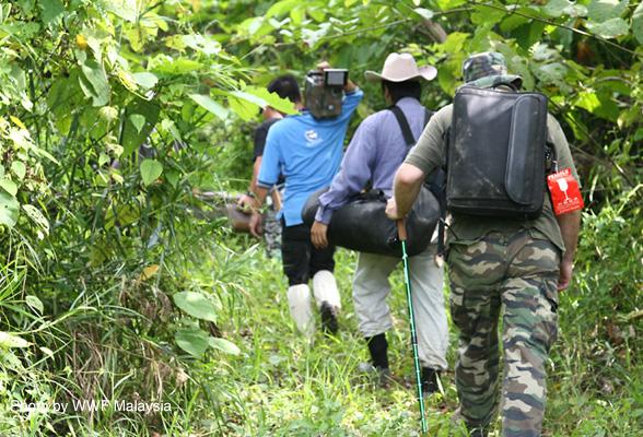 Sumatran Rhinos in Borneo Down to a Few Dozen Animals