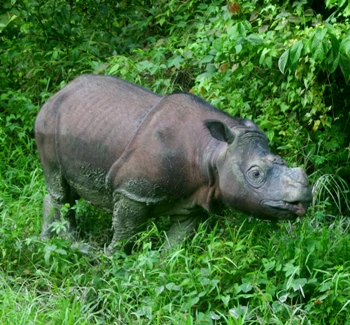 Tam secure in the protection of the Tabin Wildlife Reserve