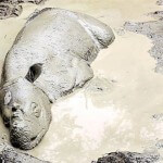 Preventing the extinction of the Sumatran rhinoceros