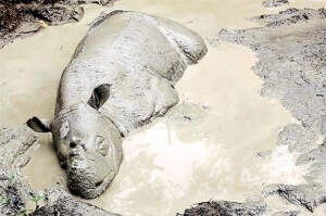 Mud bath: Male rhino Tam enjoying his moment in a wallow at Tabin Wildlife Reserve, Sabah. In the past, captive rhinos were not given access to wallows, which they need to cool their bodies and obtain various minerals. — Bernama